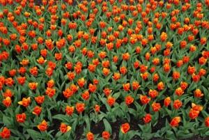 Citaten Over Schoonheid : Spreekwoorden en citaten over bloemen
