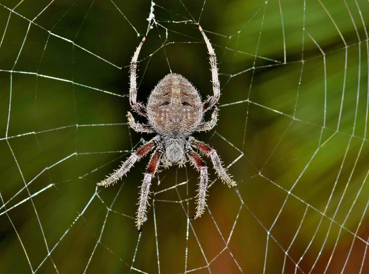 Spider bodyparts - Anatomy of spiders